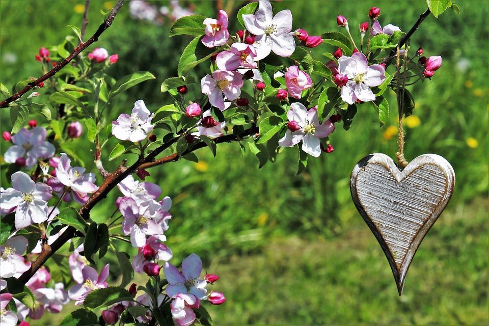 Leggeri a Primavera: laboratorio di potature olistiche